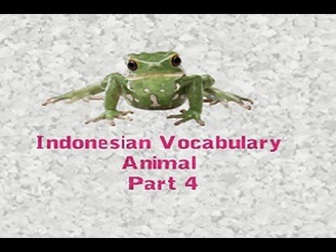 Learn Indonesian Vocabulary with Pictures Animal Part 4/6