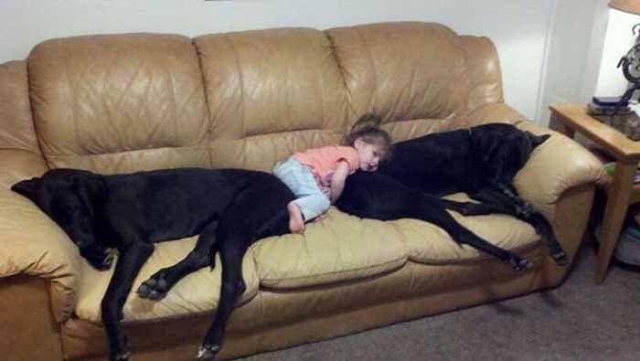 Köpeğiniz Koltuklara Çıkıyormu ?   İzmir Köpek Eğitim Okulu