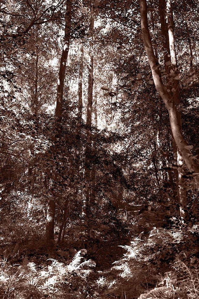 Bomen en het bos II.