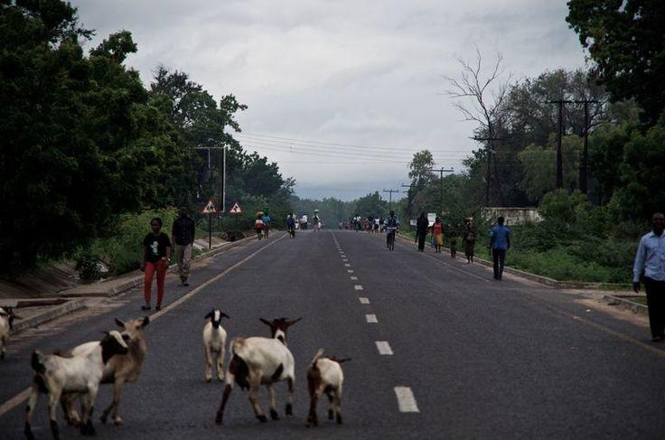 Amaury Hauchard  La M1, qui parcourt le Malawi du nord au sud, est surnommée « l'autoroute ». C'est la seule route qui traverse le district de Nsanje.