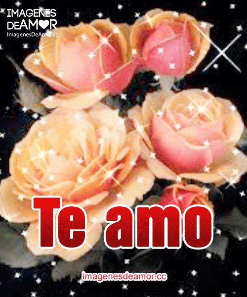 Descarga gratis imágenes de rosas con movimientos. Comparte con tu parejas hermosas rosas con frases de amor. No olvides suscribirte :)