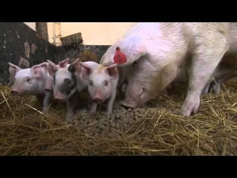 """James D´Arcy on """"Tractor Ted meets Baby Animals""""."""