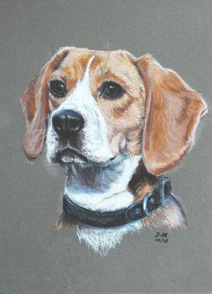 """chalk beagle picture  That look is either: """"Did someone ring the dinner Bell"""", or """" Rabbit, I smell rabbit!"""""""