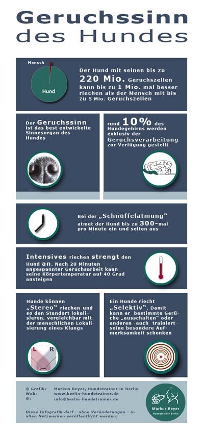 Infografik: Der Geruchssinn des Hundes