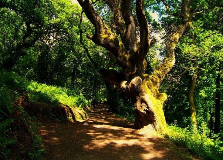 Lost Gardens of Heligan, Cornwall, England