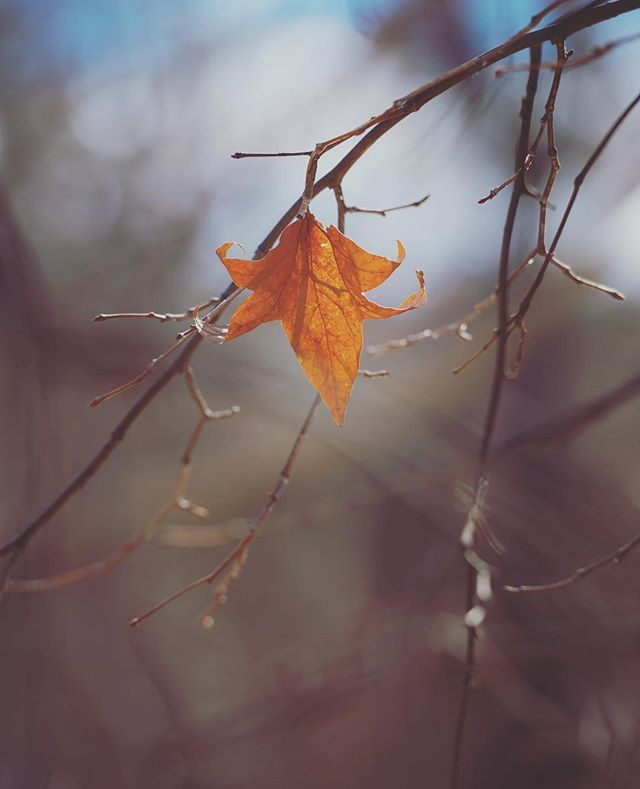 "Last"" #nature #leaves #leaf #fall #autumn #seasons #outside ..."