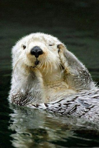 Buongiorno! Il risveglio della lontra dormigliona