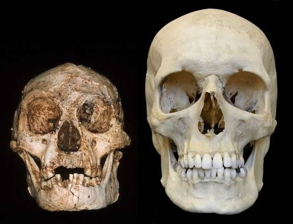 """Homo floresiensis, dubbed """"the Hobbit,"""" lived about 18,000 years ago. Several fossils of the hominid have been found, though the first female skeleton (called LB1) is the most complete. Scientists discovered the remains of a 3-foot-tall (1 meter), 30-year-old adult female hominid in 2003 in the Liang Bua (LB) cave on the remote Indonesian island of Flores. skull of homo floresiensis and modern human"""