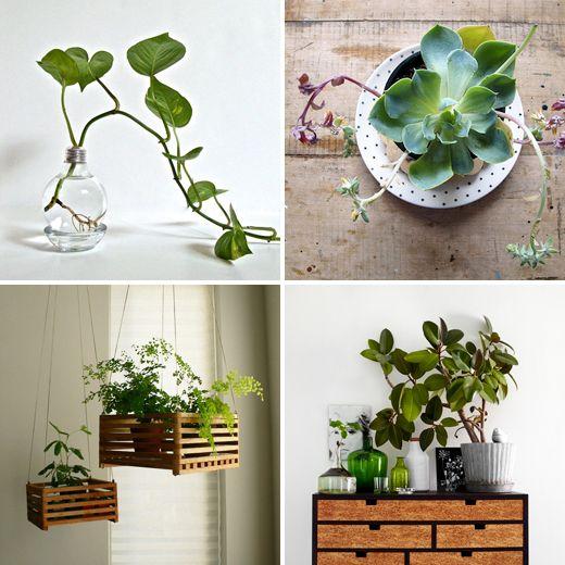 http://diyordie.elleinterior.se/gron-inspiration/plants02-2/