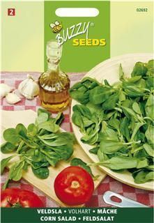 Corn Salad Volhart