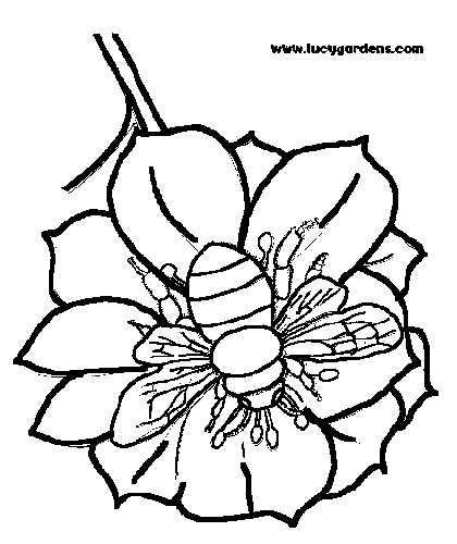Honey Bee Garden Picture To Color