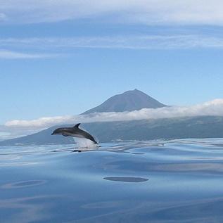 Ilha do Pico.