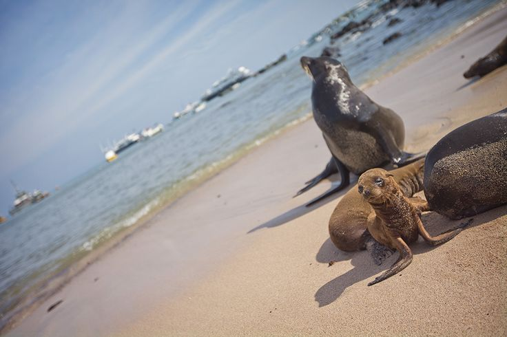Ecuador's Galapagos Islands has some of the most unique and diverse wildlife, birdlife and marine life in the world – definitely one for the bucket list!