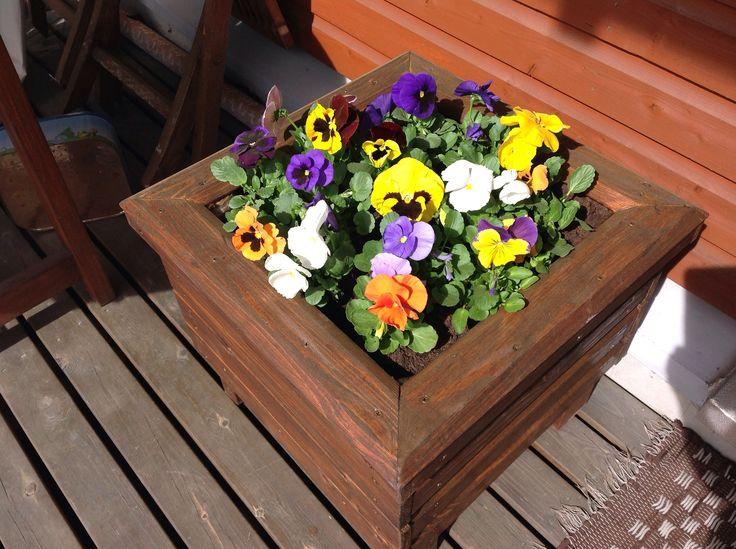 Isin rakentama puutarhalaatikko