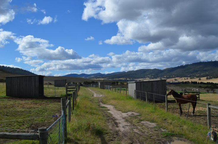 Divided into 14 main paddocks and 1 house paddock (1 main paddock divided into 11 individual horse paddocks, with shelters), Laneway system to all paddocks.  #TAS #HorseProeprtyAu #RuralLife