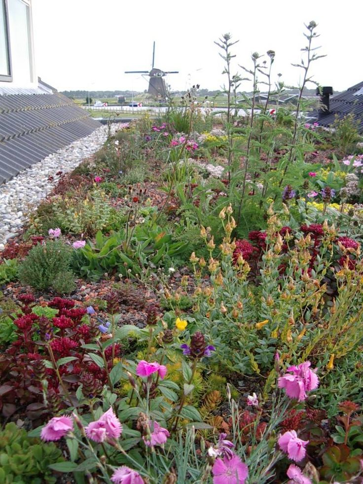 A Roof With Flowers 169 Zinco Green Roofs In 2019