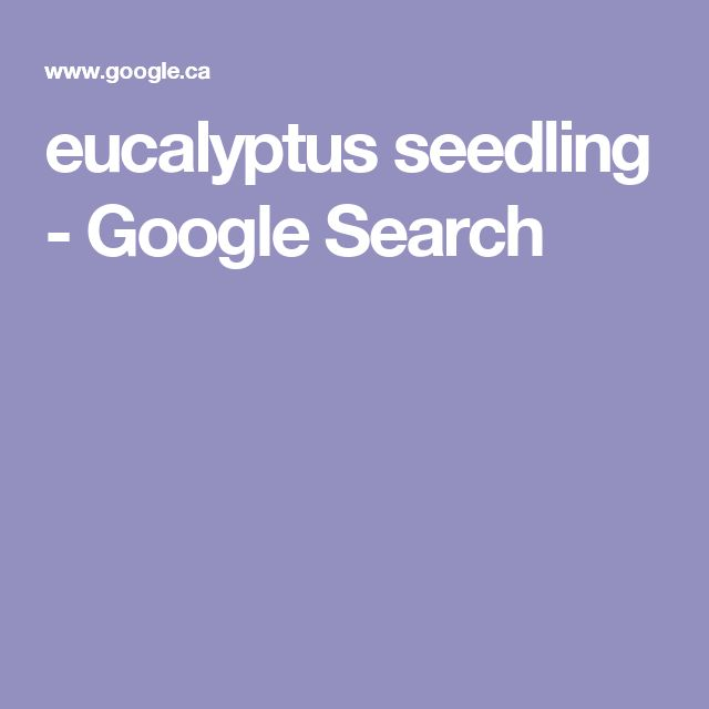 eucalyptus seedling - Google Search