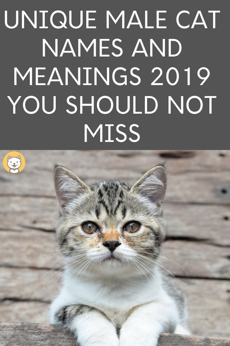 2500 Unique Cat Names For 2020 You Should Not Miss Cat Names Boy Cat Names Unique Cat Names