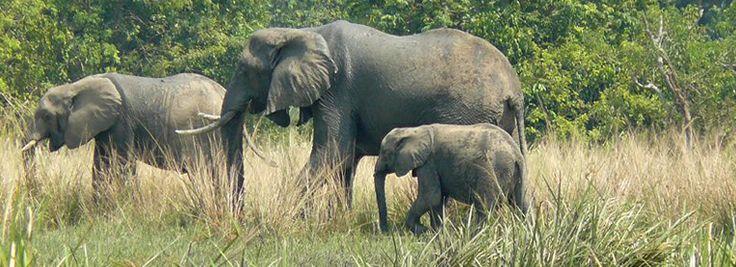 bwindi elephants-2