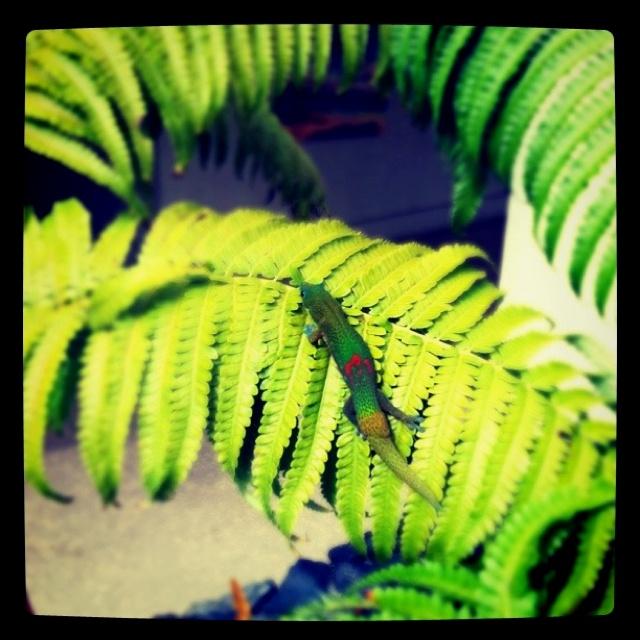 august - handprint gecko head or handprint leaves & draw on gecko