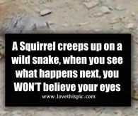 A Squirrel creeps up on a wild snake, when you see what happens next, you WON'T believe your eyes