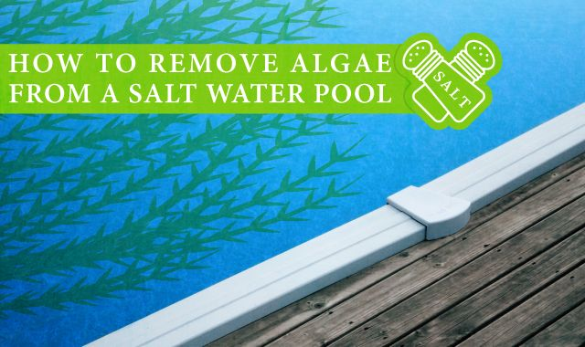 How to detect and eliminate algae and bacteria in pools and hot tubs