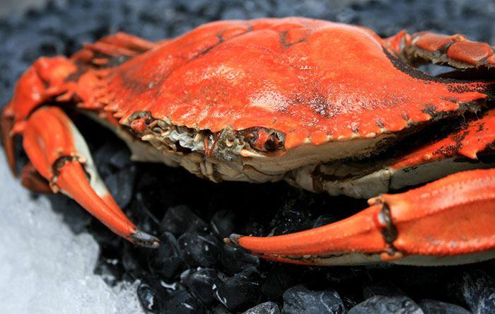 #crab #festivaldemuelas #cangrejo #grupofragata #bogota #restaurantes
