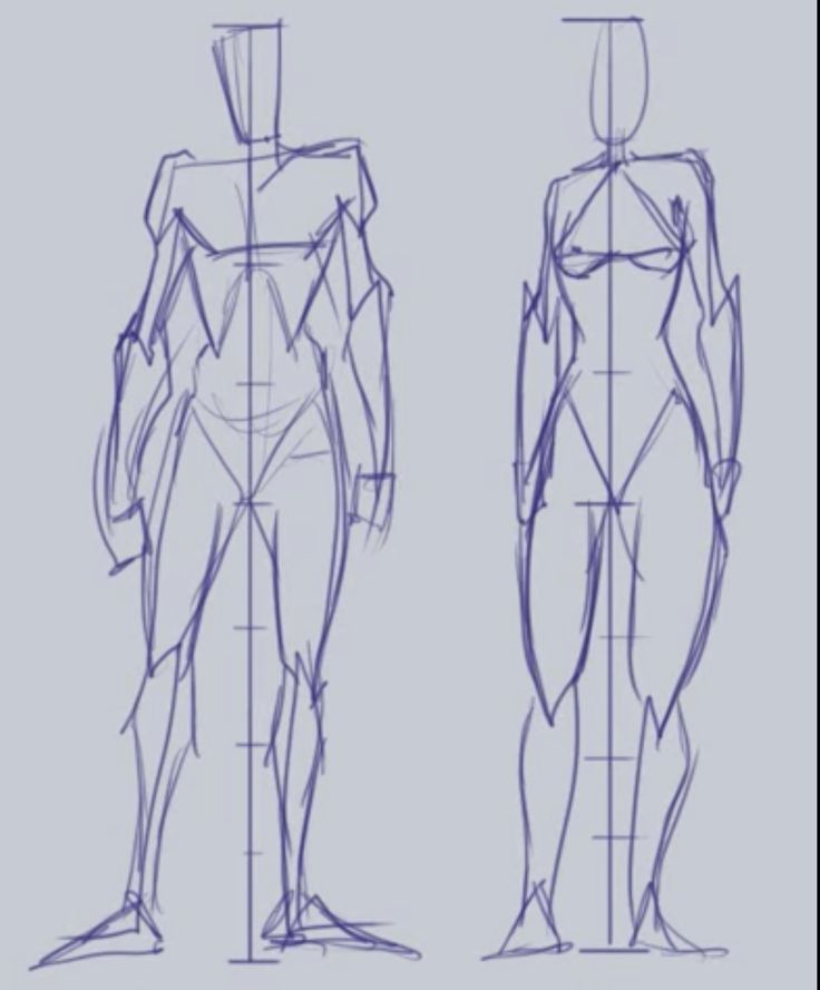 карнизов рисуем анатомия человека в картинках пасечнику пригодится
