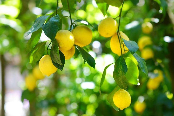 1000 images about sicilian orange on pinterest orange
