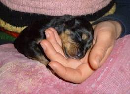 fotos de perros bebes - Buscar con Google