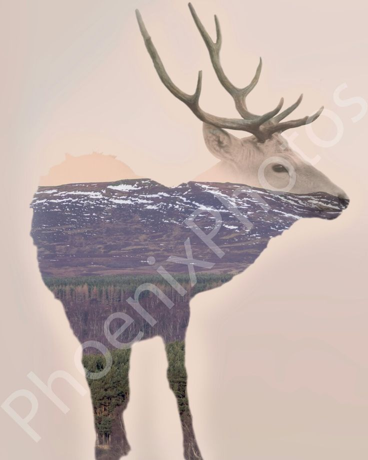 Bukhara deer and Cairngorms double-exposure