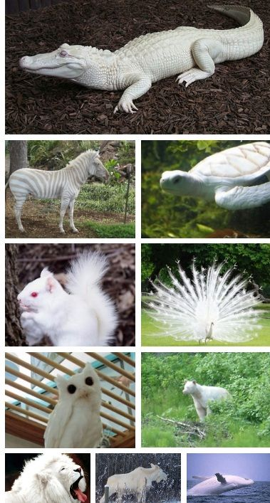 Rare albino animals. I question anything with black eyes, or black pigment, but they are still white.