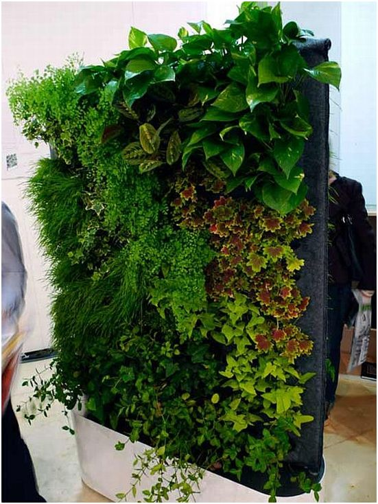 How To Build A Living Wall best 25+ living walls ideas on pinterest | wall gardens, vertical