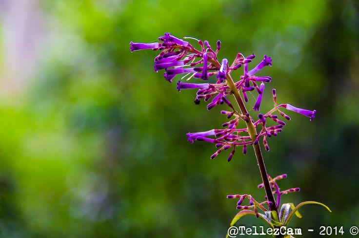 Bellas flores adornan la ronda de la Quebrada La Vieja