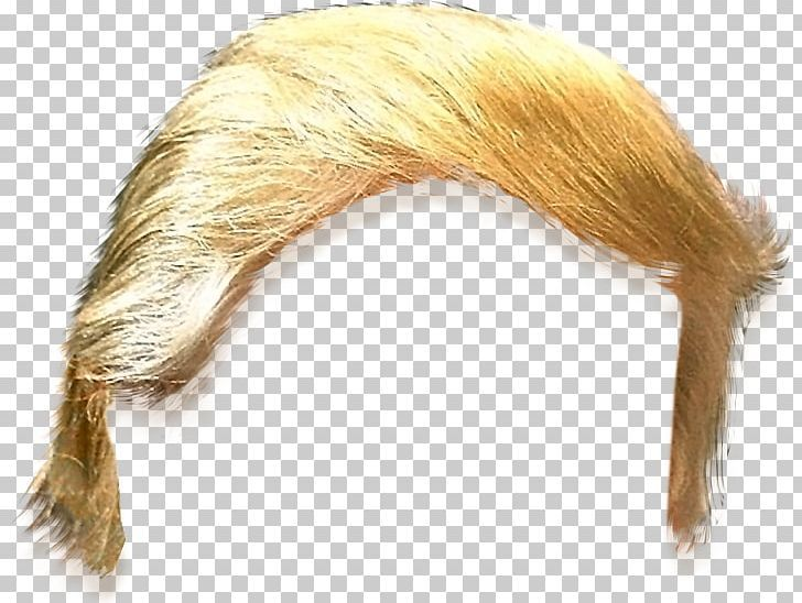 Pin On Donald Trump