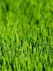 Mousse sur la pelouse