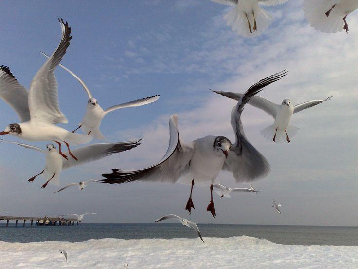 At Baltic Sea