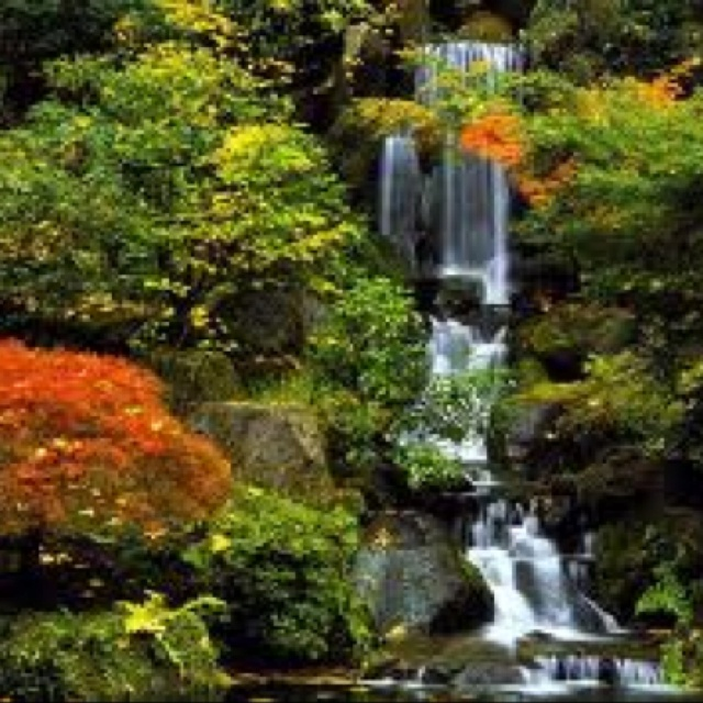 japanese gardens kildare japan pinterest ireland