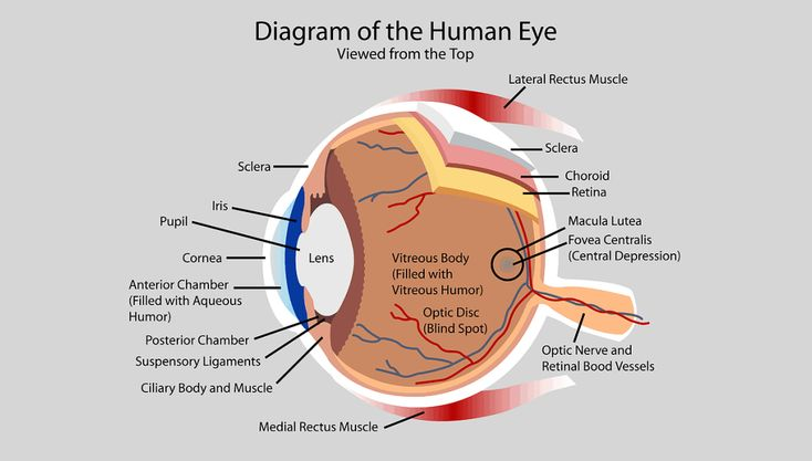59 best Anatomy & Physiology Diagrams images on Pinterest ...