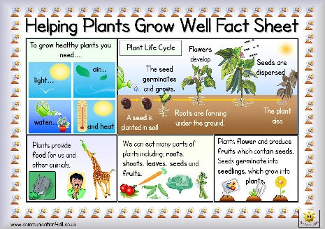 Helping Plants Grow Well Double Sided Fact Sheet: A4 fact sheet to support the teaching of this topic (3B). One side includes key information with picture support and clearly printed text while the other side has a glossary of appropriate vocabulary.