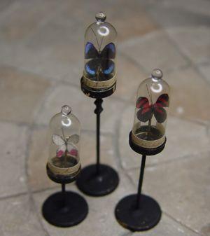 miniature Curiosities and Specimens