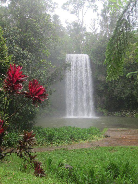Daintree rainforest Queensland - The oldest Rainforest in the world, #Australia
