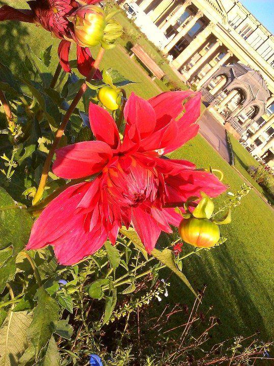 Morgens auf dem Schlossplatz