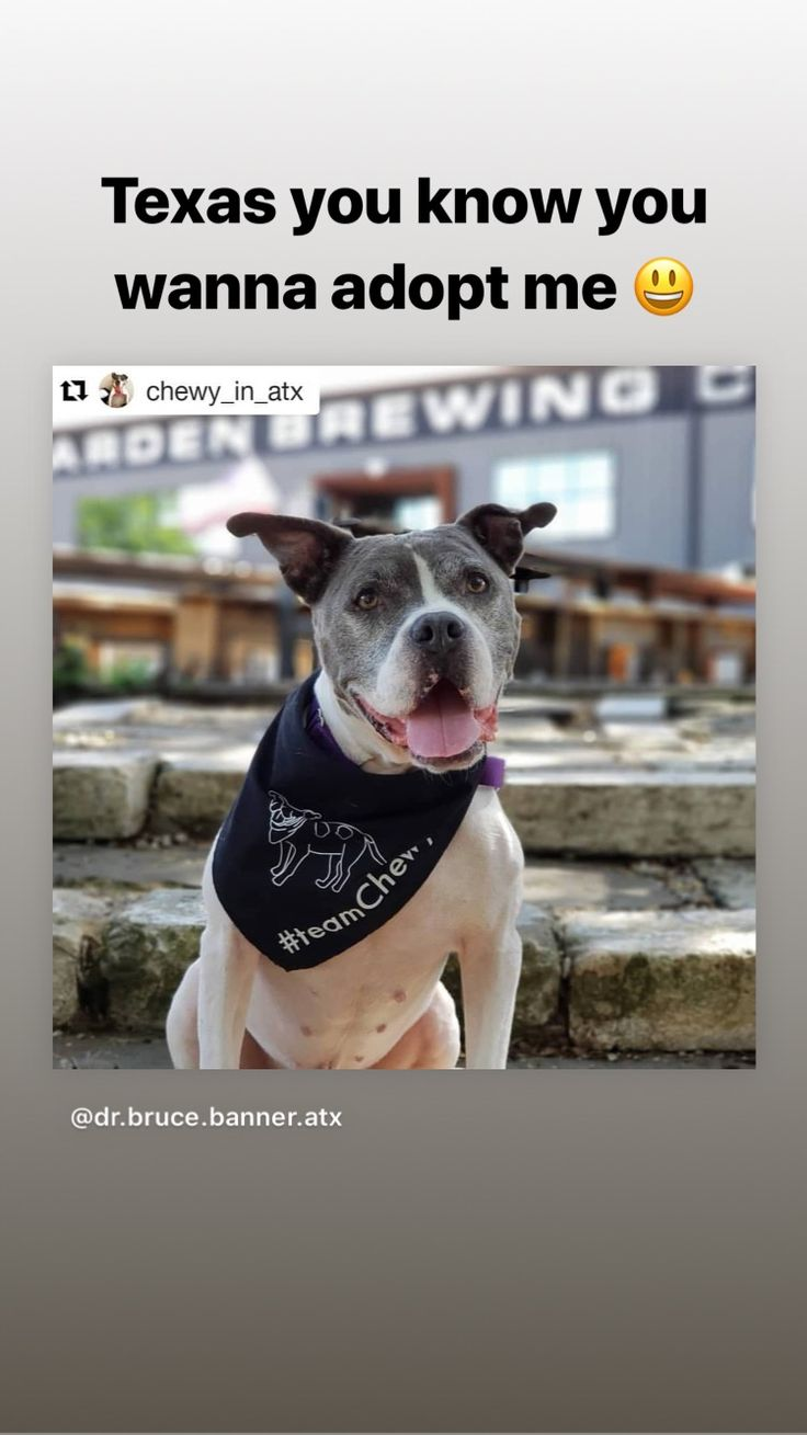 Chewy needs a furever home. His with Austin Pets Alive