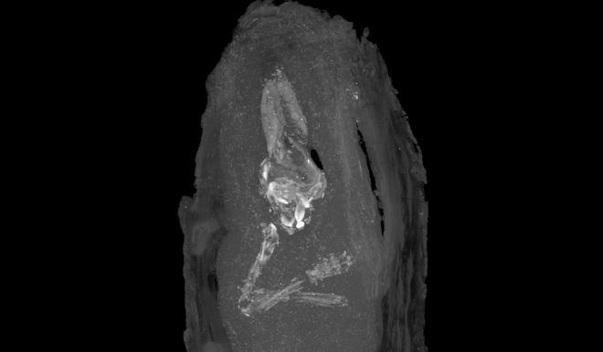 Una momia egipcia de un feto de 18 semanas | Ciencia | EL MUNDO