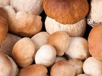 Vaříme z hub: šumavský strouhanec, hříbkové halušky, houbový boršč...