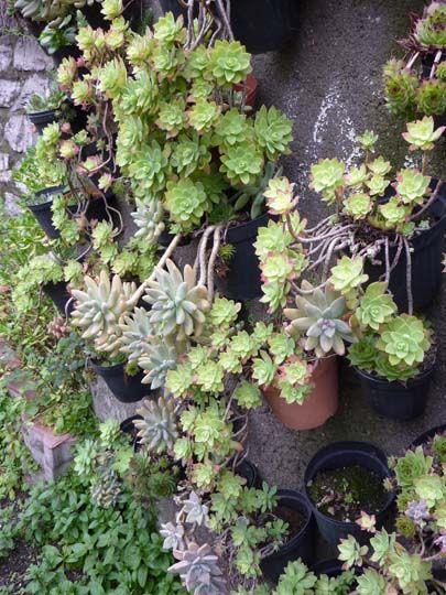 Le 25 migliori idee su giardino di piante grasse su - Giardino roccioso piante grasse ...
