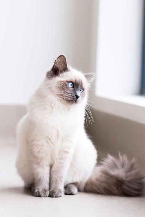 Pin Von Ho Kwong Yin Auf Cats Dogs Katzen Hubsche Katzen