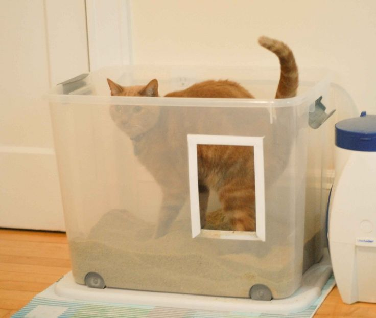 what to do when your cat is not - Litter Boxes