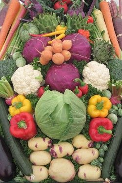 Organic Vegetable Gardening Tips for Beginners